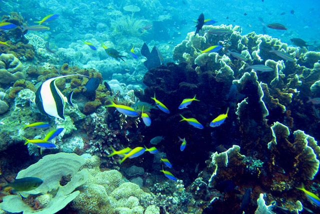巴厘岛旅游_巴厘岛旅游攻略_巴厘岛旅游景点介绍_旅游