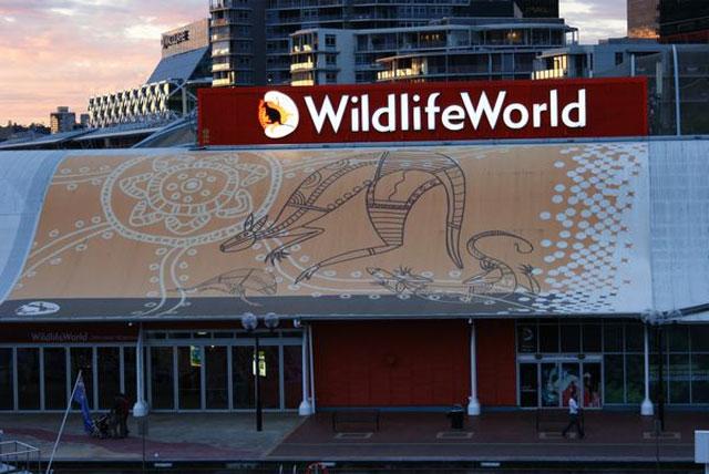 悉尼野生动物