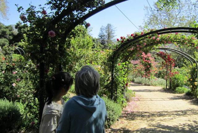 迪斯康索花园