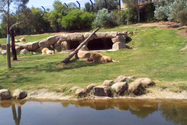 堪培拉动物园水族馆