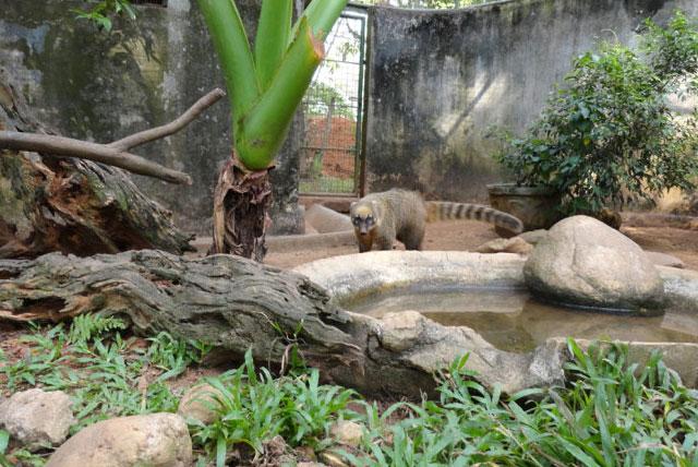 德希韦拉动物园