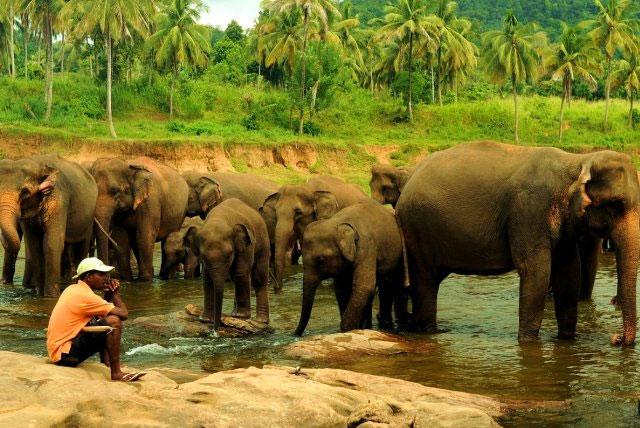 平纳瓦拉大象孤儿院