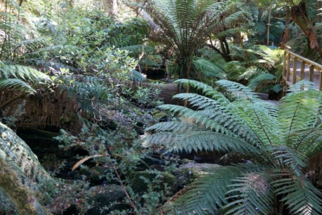 乔治布朗植物园