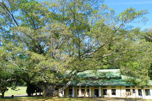 Hakgala 植物园
