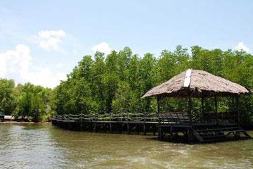 沙巴红树林生态保护区