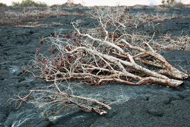 熔岩树国家纪念碑