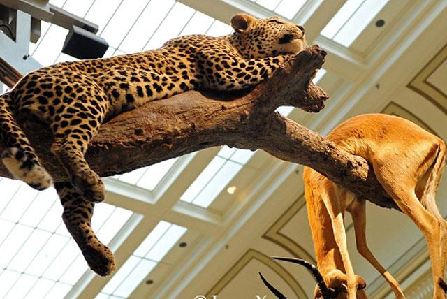 寇基自然历史博物馆