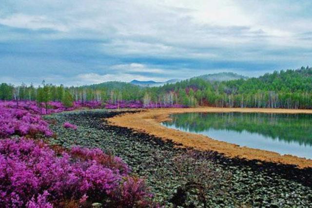 达尔滨湖国家