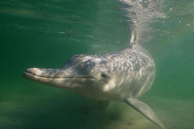 珍稀海洋物种