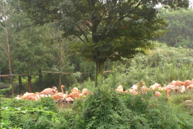 上海野生动物园蝴蝶园