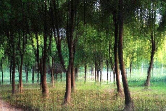 仙霞森林公园