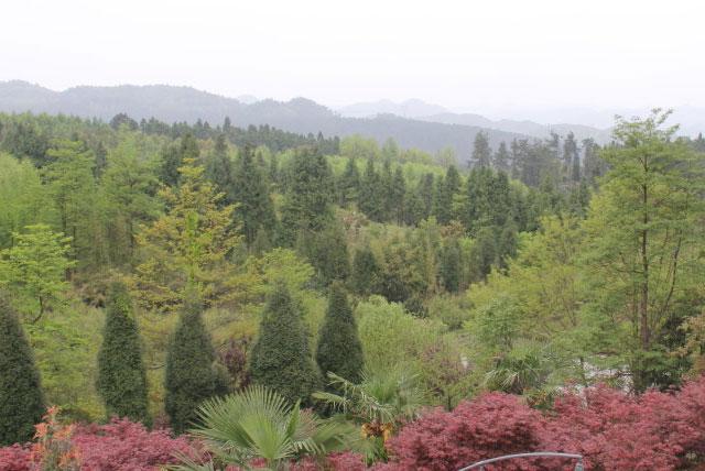 阳湖森林公园