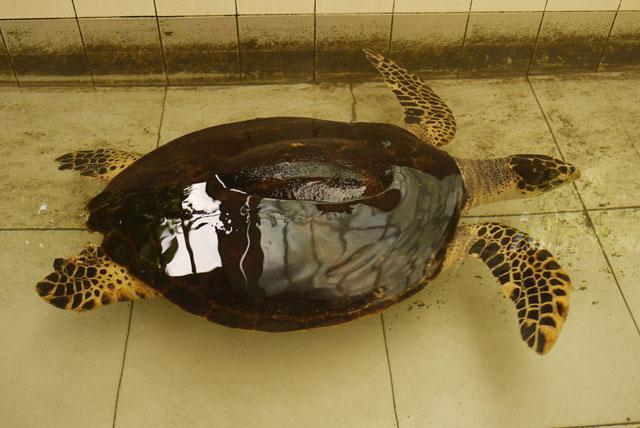 海龟保护区