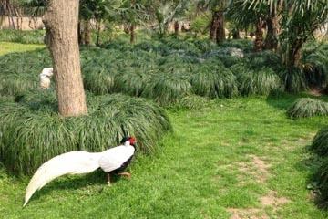 上海野生动物园百鸟园