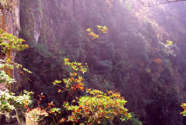 毕节森林公园旅游
