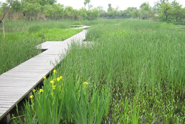湿地植物观赏