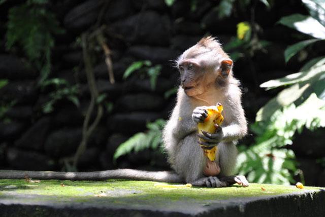 圣猴森林公园