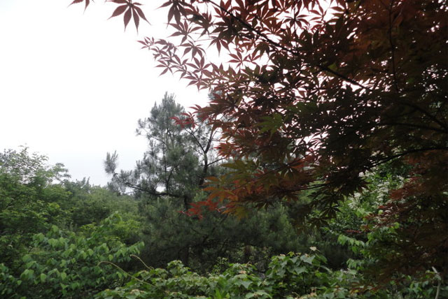 瑶琳国家森林