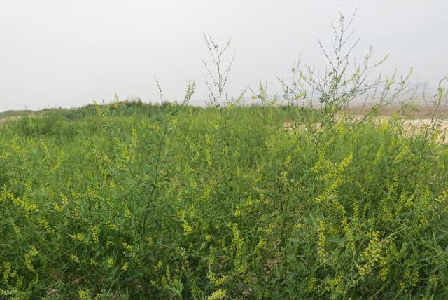 贝壳堤岛与湿地