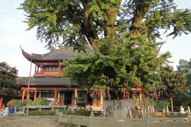 上海报国寺
