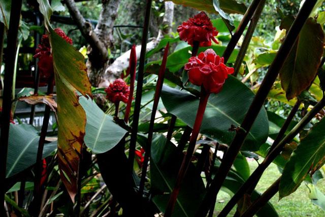 雨林自然公园