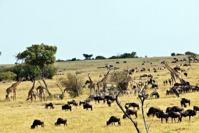 肯尼亚山国家公园