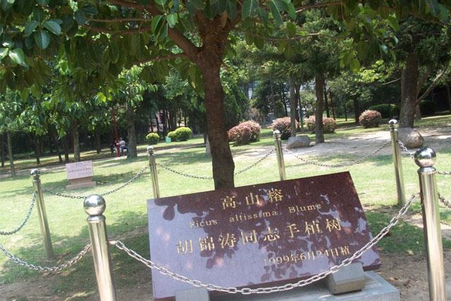 树木观赏区
