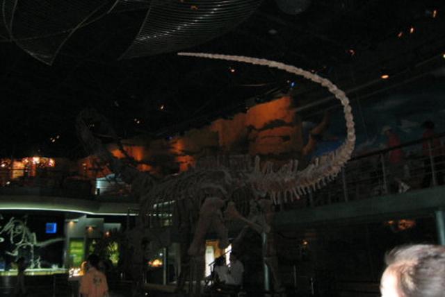 恐龙陈列厅