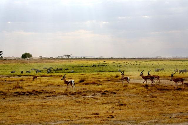 安博塞利国家公园