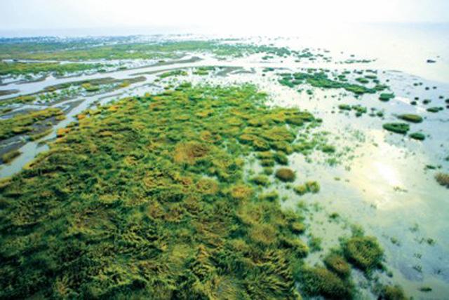 九段沙湿地保