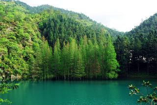 阳明山国家森林公园图片