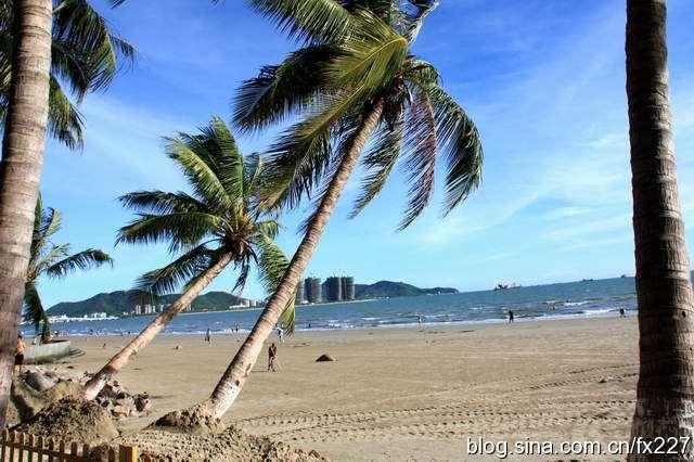 街拍:三亚湾椰林风情(组图)