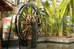 天津热带植物园