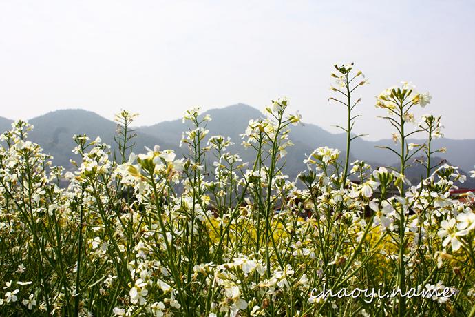 走过婺源 鲜花铺满天