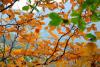 金泉国家森林公园