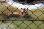 曼谷野生动物