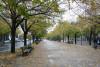 菩提树下大街