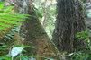 中国科学园西双版纳热带植物园