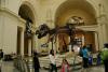 菲尔德自然历史博物馆