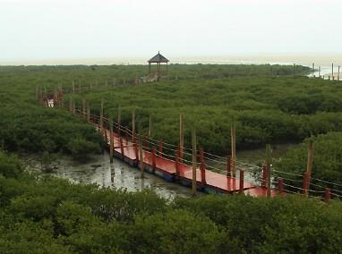目的地 亚洲 中国 广西壮族自治区 北海市 英罗红树林  英罗红树林在