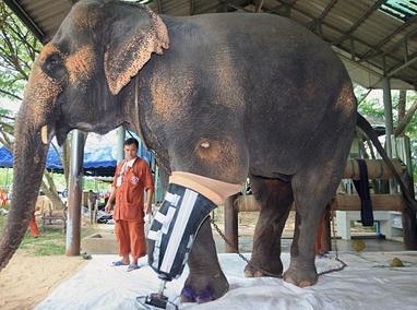 南邦府大象