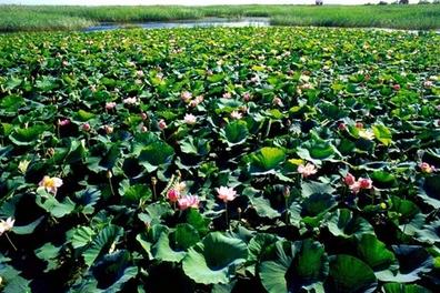 同江市休闲度假游 感受大自然的魅力