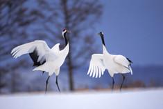 向海湿地保护区 看波光潋滟千里飞鹤