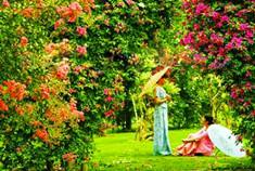 误入诱人花草的世界 西双版纳热带花卉植物园