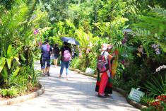 望天树景区热带花卉大道