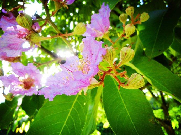 西双版纳热带花卉园就位于景洪市区,园内有许多主题小园区,植物很多,景色一级棒,热带花卉园属于中科院热带植物所里,景洪是热带雨林气候,在这里生长各种珍惜奇异的植物,气候温暖湿润多雨,几乎是花开四季,叶绿长青,生于北方的我们在里面真是眼花缭乱,我们找到了 可可 咖啡豆 菠萝蜜 帝王莲 棕榈树 鸡蛋花.