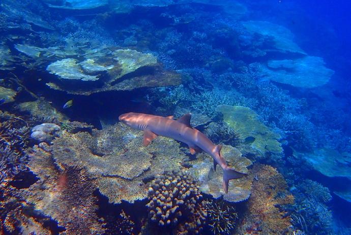 壁纸 海底 海底世界 海洋馆 水族馆 桌面 690_462