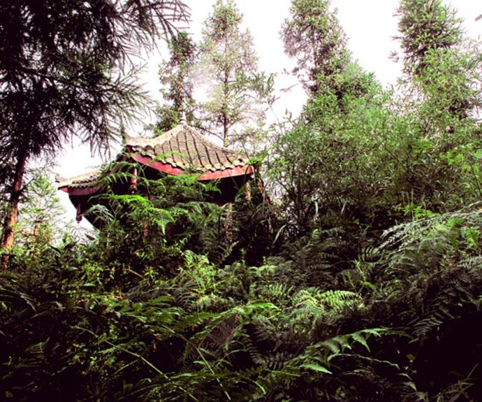 600年前,一场地震震掉了茶马古道上一座新建的县城; 600年后,又一场地震 震出了一个人居漏斗的世界之最 在《摄影报》的眼皮底下,又一项世界级别的景观被发现。继上期我们去四川省双流县太平镇采访了那位跨越了三个世纪,已经116岁高龄的中国女人付素清后,8月30日,报社创作绿灯采编组又马不停蹄前去采访刚刚又被地震过的四川省芦山县双石镇围塔漏斗村。 漏斗,是人们常用的一种用以漏下去点什么东西的物件,过去普通得很。地貌形态的漏斗一般出现在喀斯特圈内,呈圆形或椭圆形,地面底部有排泄地表水的通道,