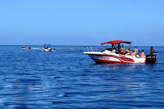毛里求斯——海豚追寻之旅
