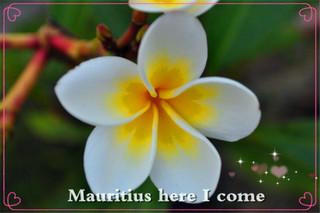 和我一起去天堂    毛里求斯